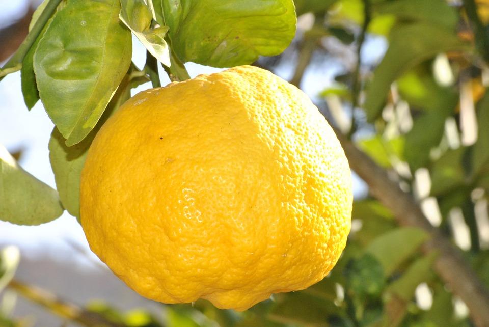 Limona, rumeni sadež zdravja 1