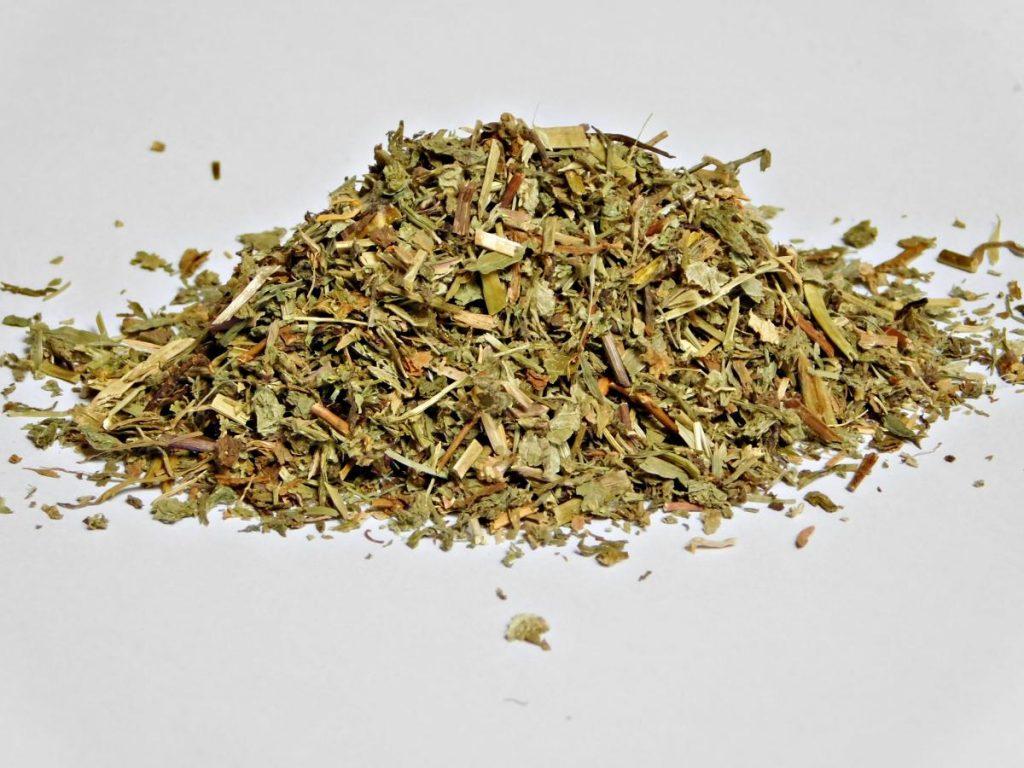 Jetičnik - pozabljena zdravilna rastlina 8