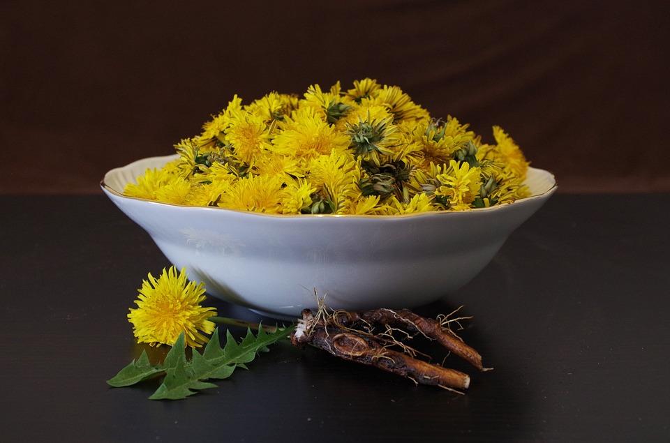 Uporaba regratovih korenin v zdravilne namene 1