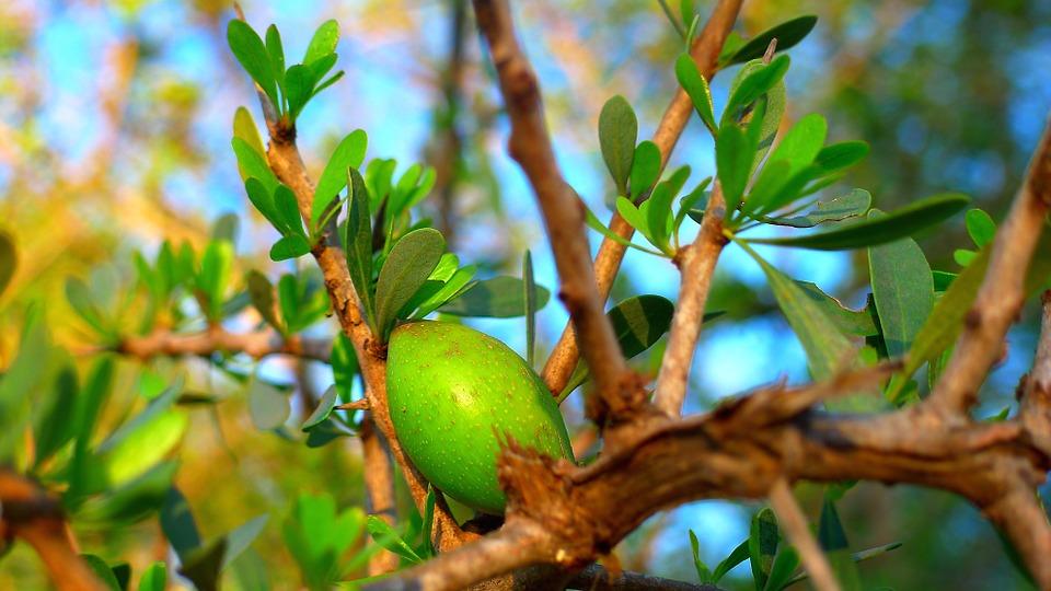 Dragoceno arganovo olje 1