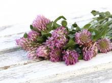 Čaj iz črne detelje za lajšanje simptomov menopavze in zniževanje holesterola